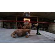 """High Risk Wrestling October 21, 2016 """"Armageddon"""" - Warsaw, MO (Download)"""